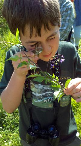 Investigating wildflower identification