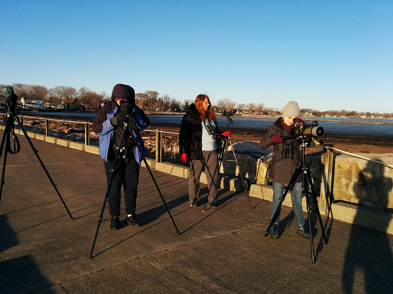 Avid Birders scoping from the Huron Pier