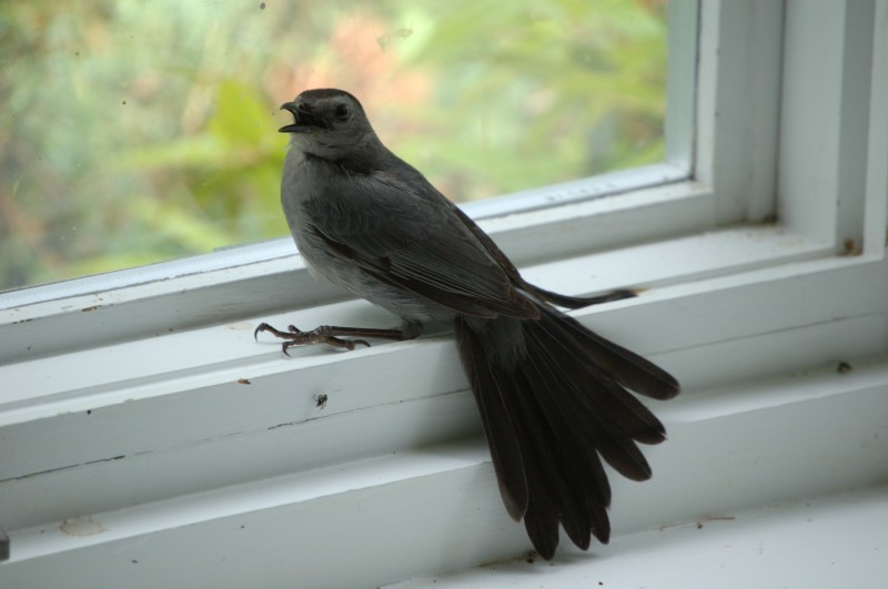 Cat(bird) in the window