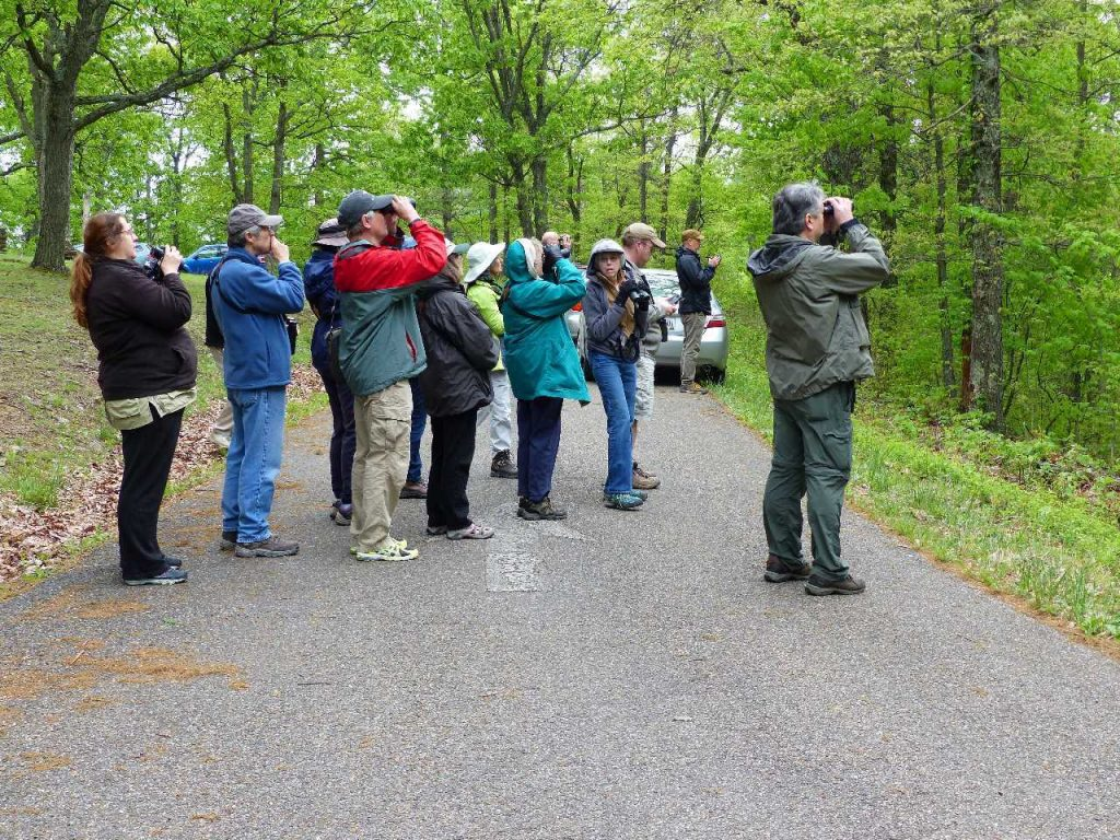 Avids scan the roadside habitat in Shawnee State Forest