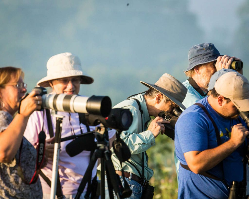 Avids check out the shorebirds at Big Island - Photo Bruce Satta
