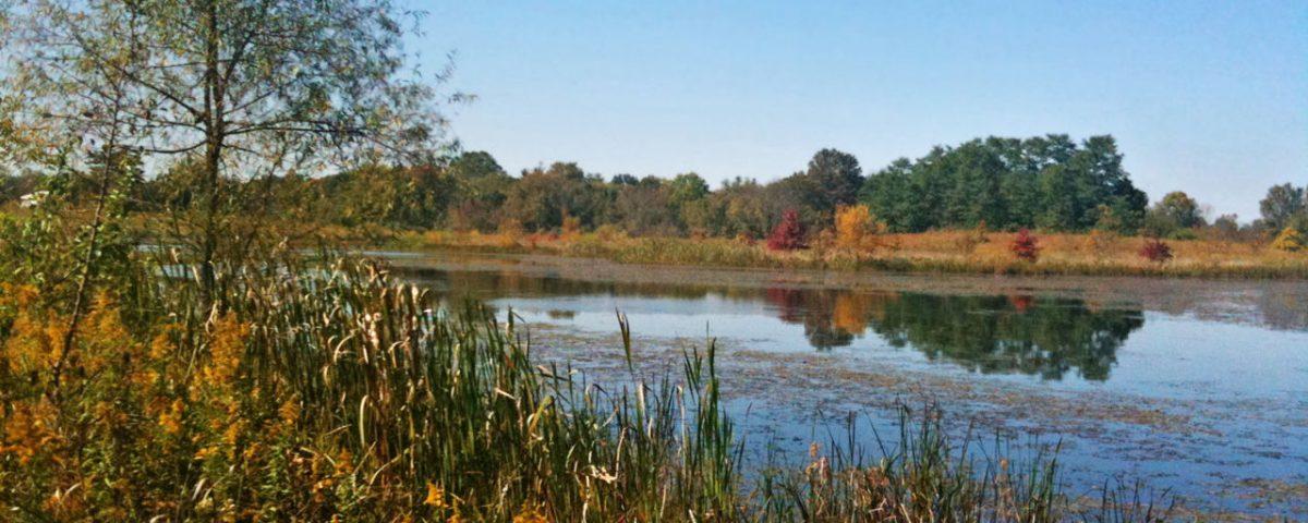 Rocky Fork Metro Park Wetland - Photo Kim Martin