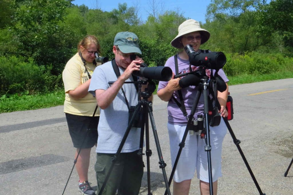 Watching Shorebirds at Mosquito Lake - Photo Lisa Phelps