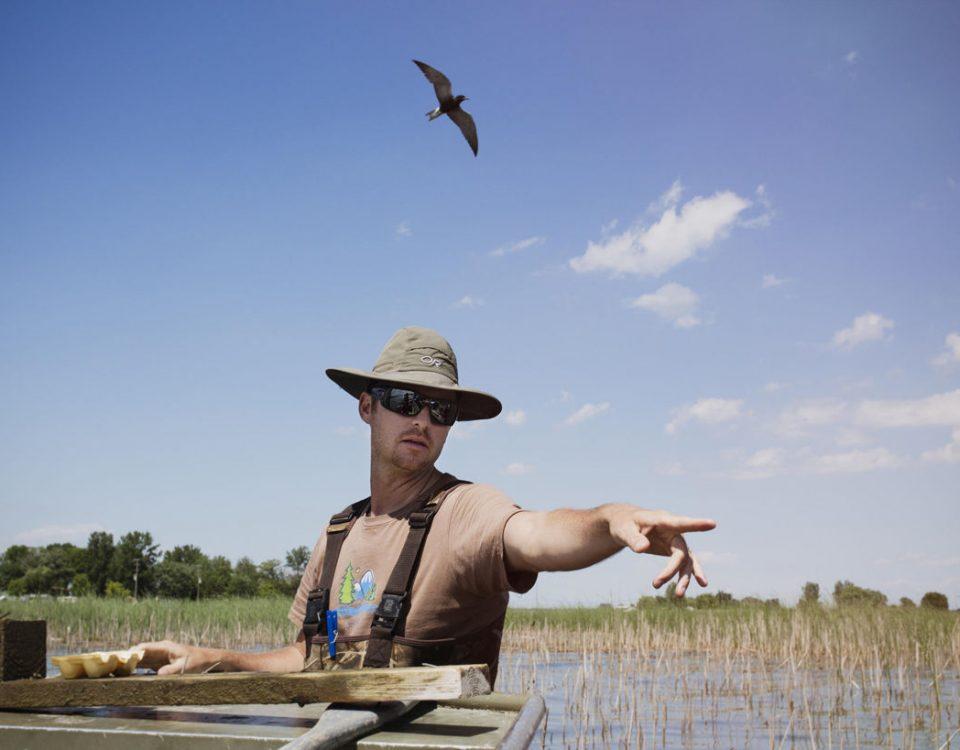 Detroit Audubon Black Tern Project - Photo Mike Fernandez