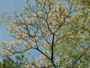 EcoWeekend: A FloweringTree