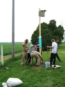 Adjusting Nestbox Pole at the London Correctional Institute - Photo Dick Tuttle