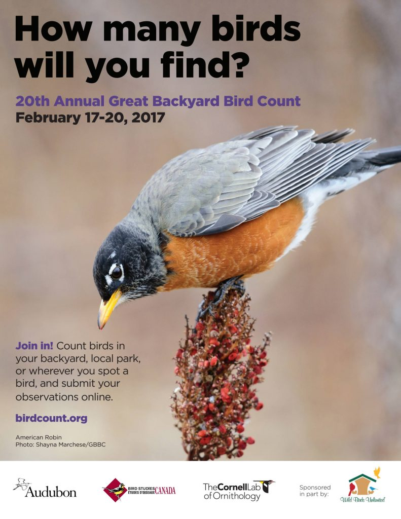 great backyard bird count photo contest winners u2013 columbus audubon