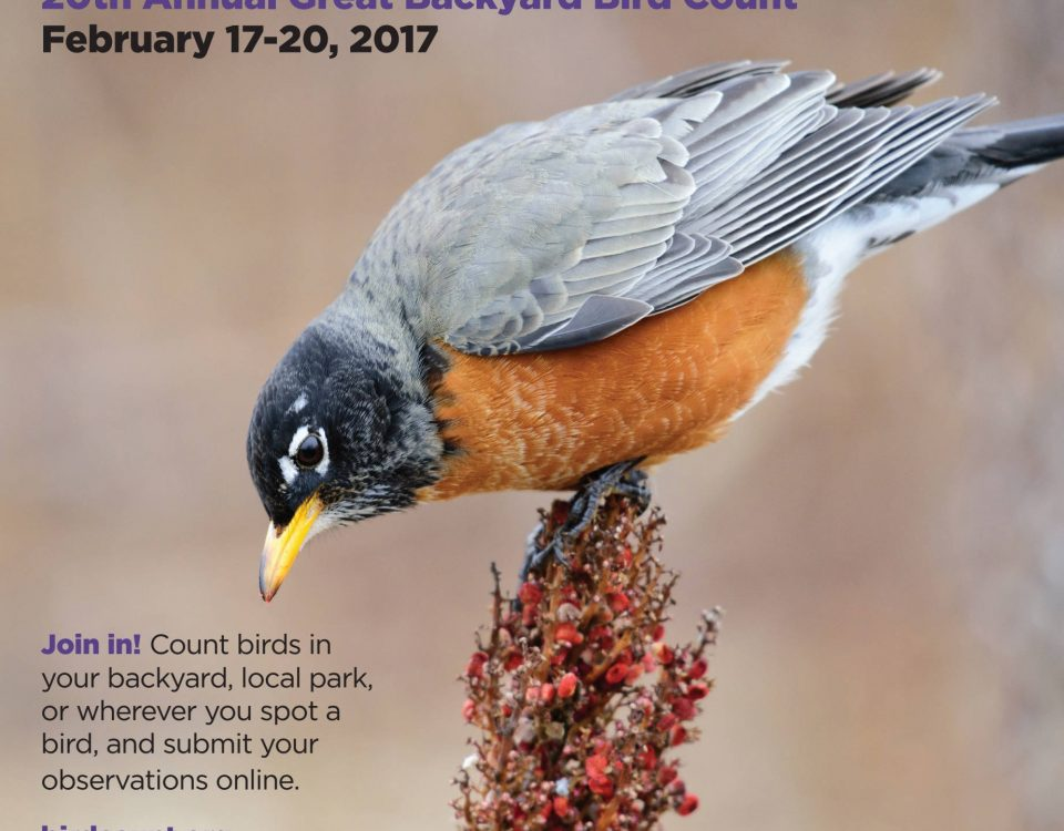 Great Backyard Bird Count Poster 2017