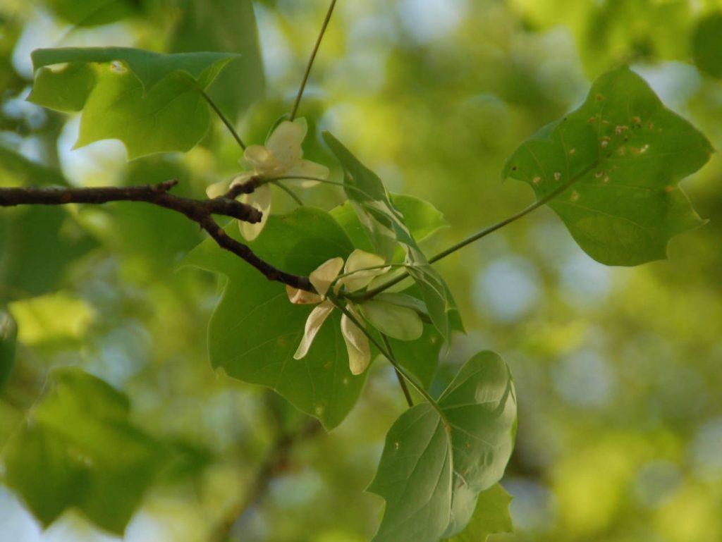 EcoWeekend: Leaf Study