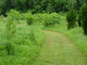 Calamus Swamp: a path winds through a meadow