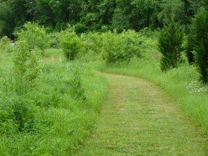 Calamus Swamp: a path winds through a meadow