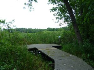 Calamus Swamp Boardwalk View