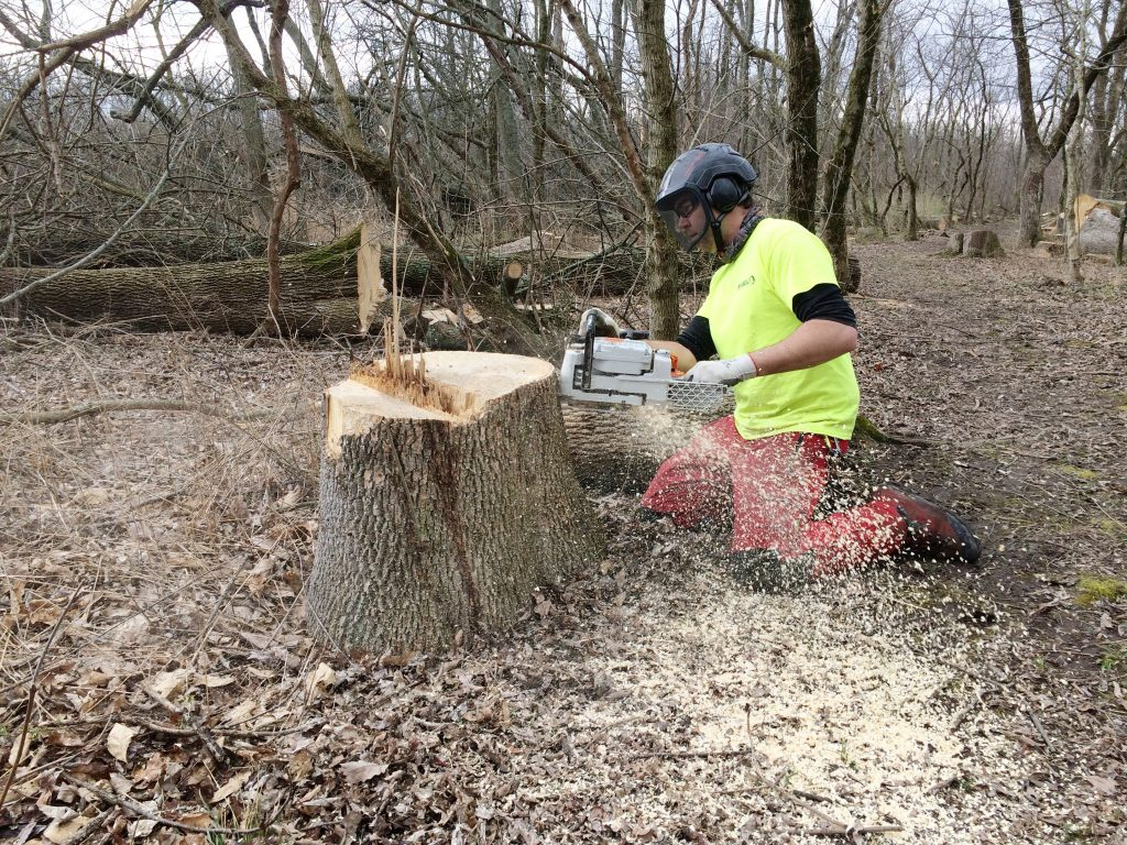 Calamus Swamp: TJ from Russell Tree Service finishing a cut