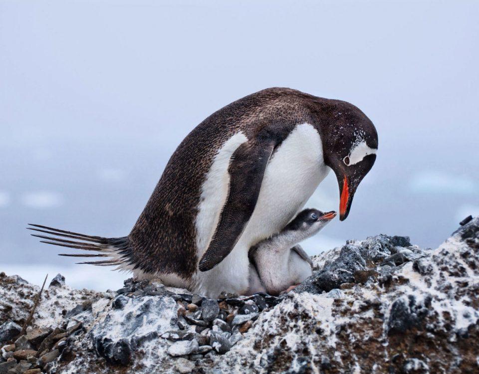 Audubon Photo Awards Winner - Deborah Albert