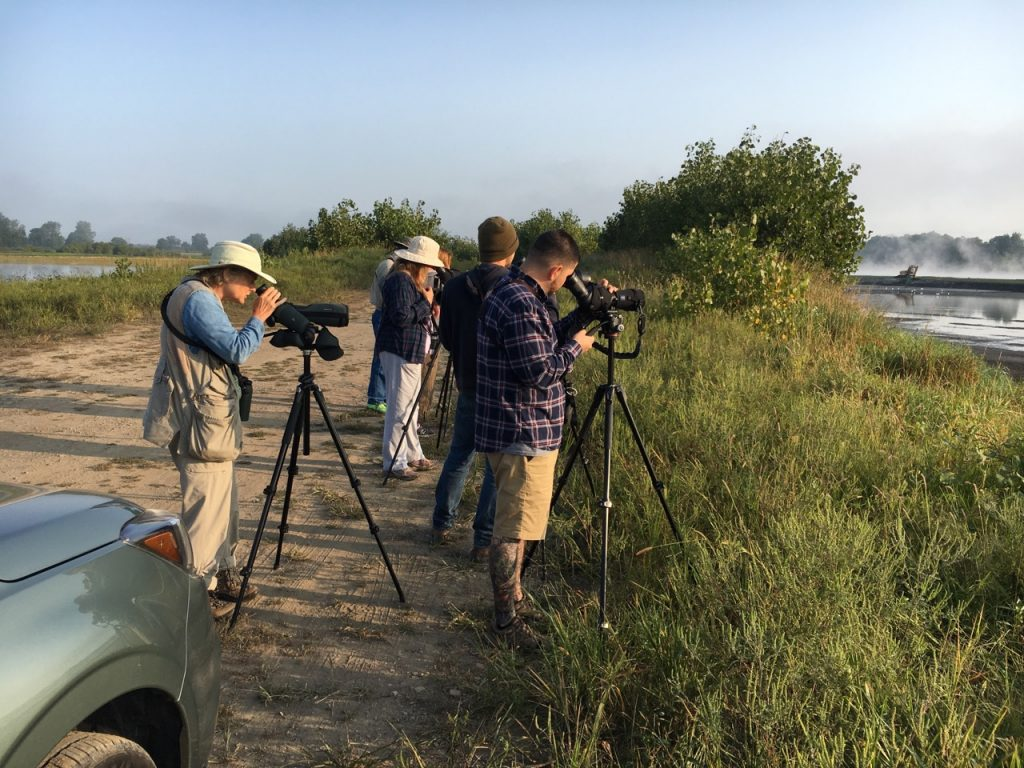 Avids Scanning for Shorebirds - Photo Earl Harrison