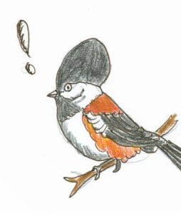Chickadee Drawing - NPR