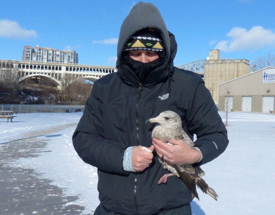 Gull Rescue