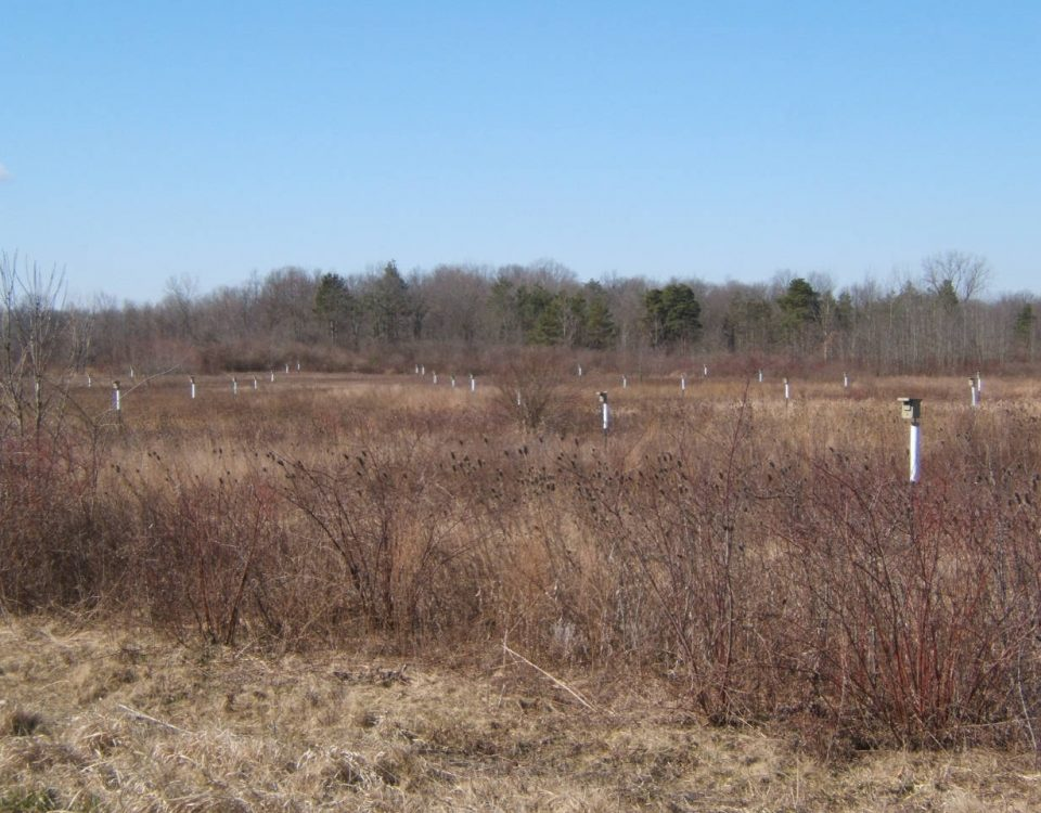 Nestboxes in the Panhandle Road Wildlife Area
