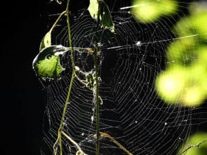 Spider web at Magee - Photo Lisa Phelps