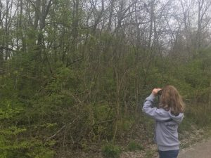 Addie Searching for Birds at Gallant Woods