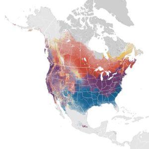 eBird song sparrow abundance map (source: ebird.org)