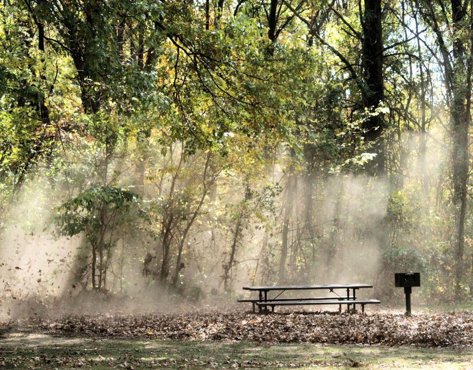 Blacklick Woods (photo Connie Mastenbrook)