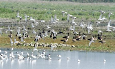 Flocks of terns, geese, and other birds await the Avid Birders (Photo Rick Stelzer)