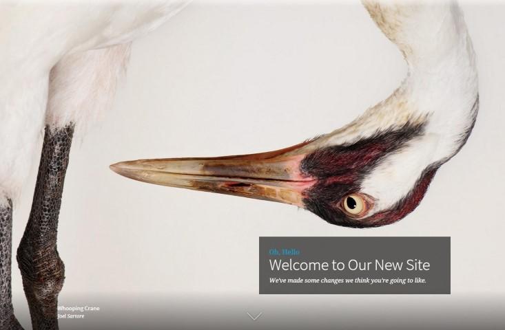 Audubon Whooping Crane